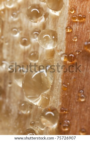 Sap pouring out of tree, extreme close up with high magnification