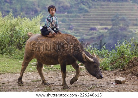 SAPA, VIETNAM - OCTOBER 26: Unidentified Vietnamese child riding water buffalo on road October 26, 2014 in Sapa, Vietnam. Children in Vietnam often ride the water buffalo while herding them. - stock photo