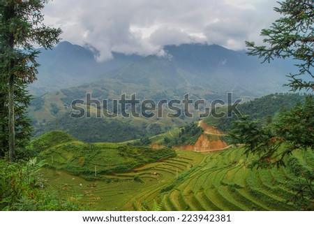 Sapa, Vietnam. Rice field view of the mountains. - stock photo