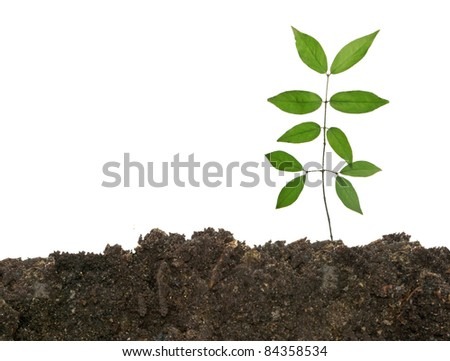 sapling growing from soil - stock photo