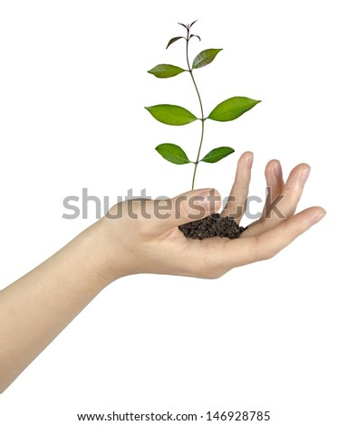 Sapling in hand - stock photo