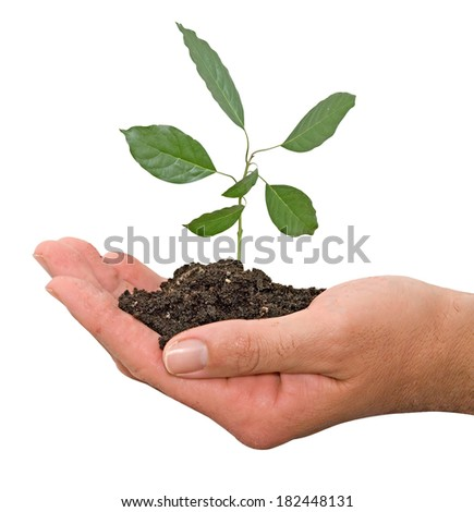 sapling in hand