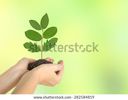 Sapling in hands - stock photo