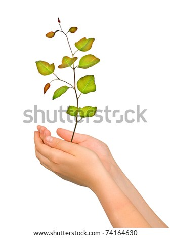 Sapling in palms as a symbol of nature protection - stock photo