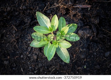 Sapling of the tree in the morning - stock photo