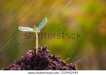 Sapling of the tree with rain in the morning. - stock photo
