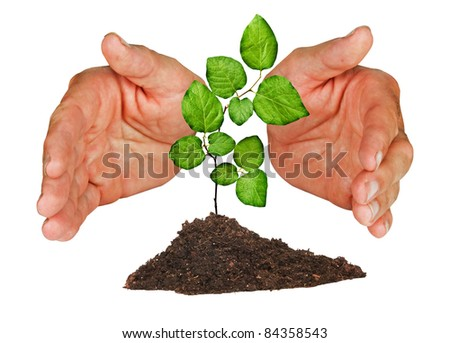 sapling protected by hands - stock photo