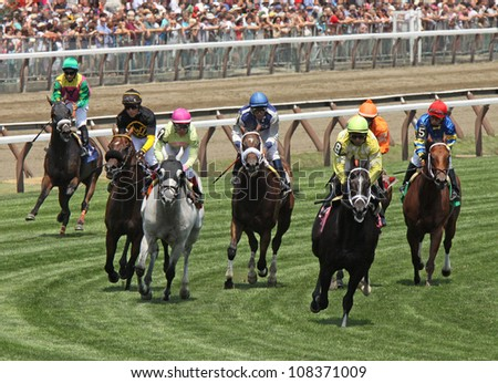 "SARATOGA SPRINGS - JUL 22: The field gallops over the turf in a claiming race on Jul 22, 2012 at Saratoga Race Course in Saratoga Springs, NY. Eventual winner is Jose Lezcano #8 and ""Driven by Solar"". - stock photo"