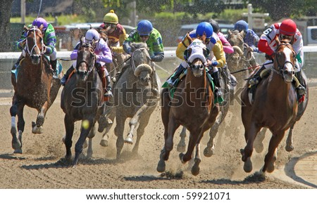SARATOGA SPRINGS, NY - AUG 28: A field of thoroughbreds takes the turn and heads down the homestretch in the first race at Saratoga Race Course on Aug 28, 2010 in Saratoga Springs, NY. - stock photo