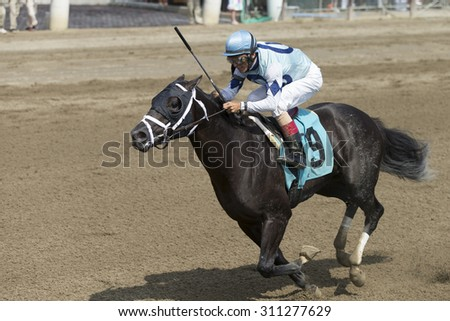 SARATOGA SPRINGS, NY - August 29, 2015: Number 9 Ready Dancer ridden by John Velazquez wins the 2nd race on Travers Day at Historic Saratoga Race Course on August 29, 2015 Saratoga Springs, New York - stock photo
