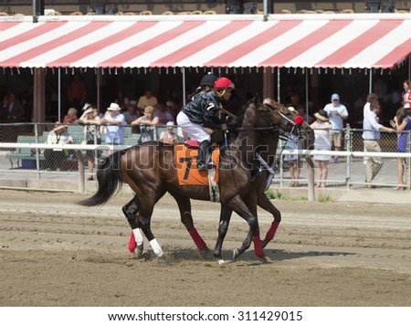 SARATOGA SPRINGS, NY - August 29, 2015: #8 Virga ridden by Irad Ortiz, Jr. before the 2nd race on Travers Day at Historic Saratoga Race Course on August 29, 2015 Saratoga Springs, New York - stock photo