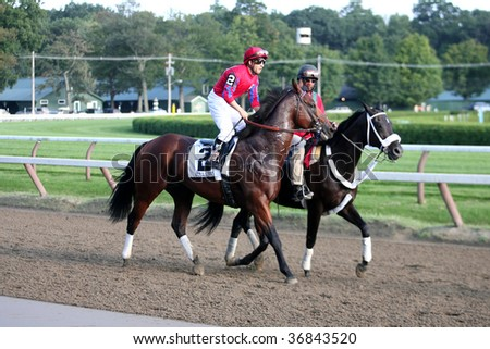 "SARATOGA SPRINGS, NY- SEPT 5: ""Bullsbay"" with Jeremy Rose aboard in the post parade for the Grade I Woodward Stakes at Saratoga Race Track, September 5, 2009 in Saratoga Springs, NY."