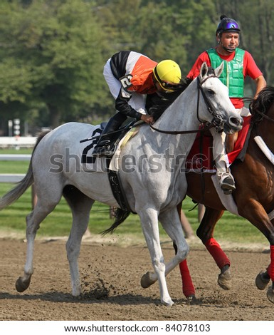SARATOGA SPRINGS, NY -SEPT 3: Earnings Release, with Jose Lezcano up, enters the track before his 2nd place finish in a maiden race at Saratoga Race Course on Sept 3, 2011 in Saratoga Springs, NY. - stock photo