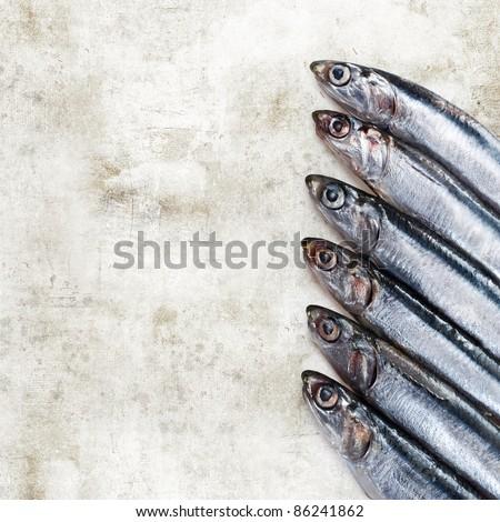 sardines - stock photo