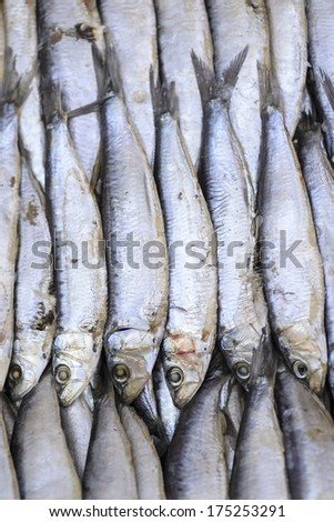 sardines in the market - stock photo