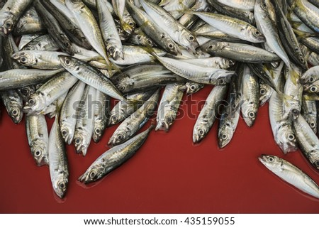 sardines on a fish market - stock photo
