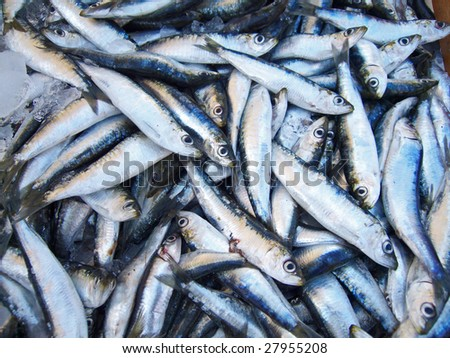 Sardines  on a market stall - stock photo