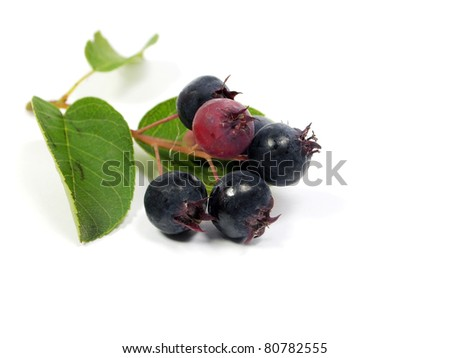 Saskatoon berries with branch on a white background
