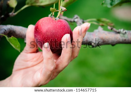 Satan tempted Eve into picking a forbidden fruit from the Tree of Knowledge. - stock photo