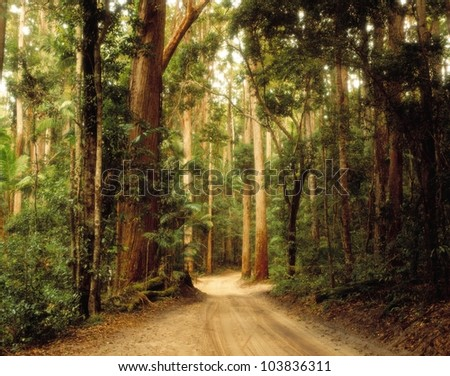 Satinay Forest, Fraser Island - stock photo