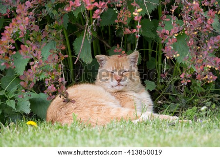 Satisfied ginger cat lying on grass and in plants and enjoying life