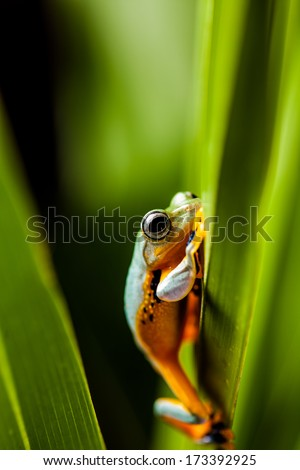 Saturated theme of jungle with exotic frog