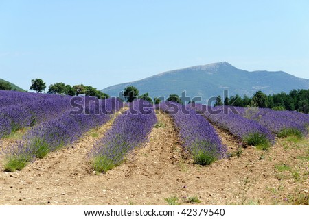 Sault is one of the major stages of the Road of the Lavender in France - stock photo