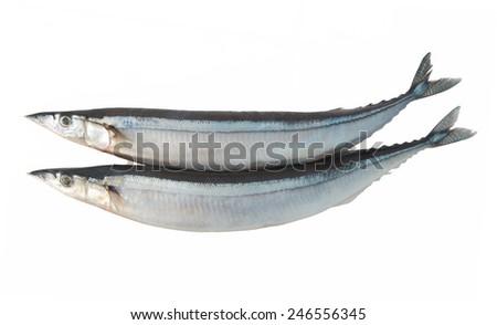 Saury fish isolated on white background  - stock photo