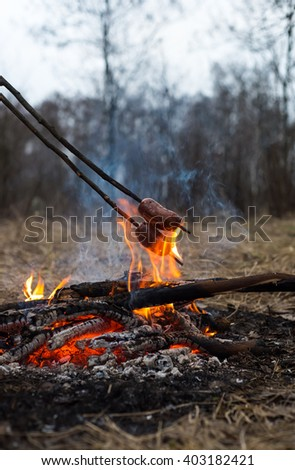Sausages on the stick grilled in the fire, forest  - stock photo