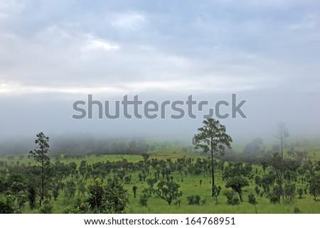 Savanna field landscape in thailand - stock photo