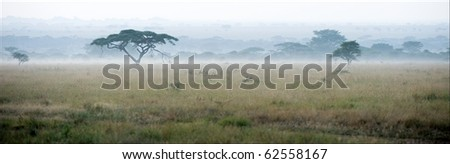 Savanna in a morning fog. A morning landscape, a fog in savanna, acacias. - stock photo