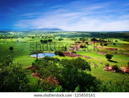 Savanna in bloom, in Tanzania, Africa panorama. Serengeti - stock photo