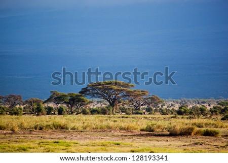Savanna landscape, foot of the Mount Kilimanjaro in Africa, Amboseli, Kenya - stock photo