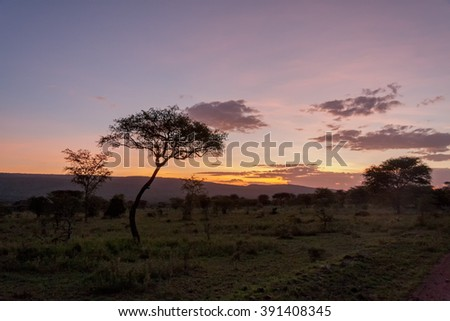 Savanna plain with acacia trees at dawn against distance view on mountain. Serengeti National Park, Tanzania, Africa.