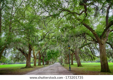 Savannah Georgia's, many parks are filled with huge Southern Live Oaks covered with Spanish Moss. Beautiful after a rain. - stock photo