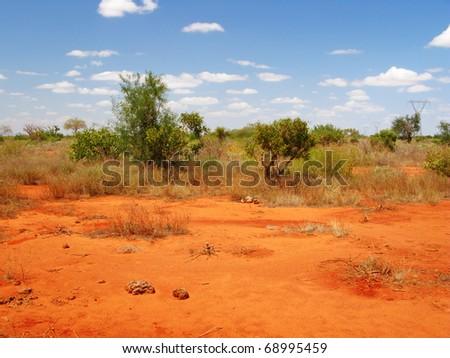Savannah landscape - stock photo