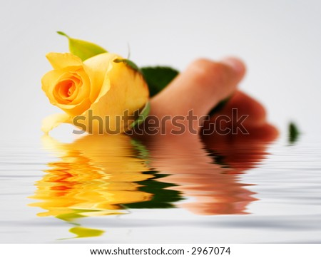 Save the Rose. - stock photo