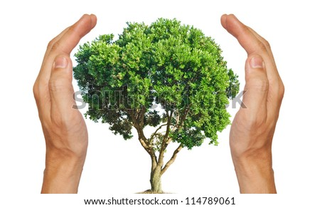 Save the tree - stock photo