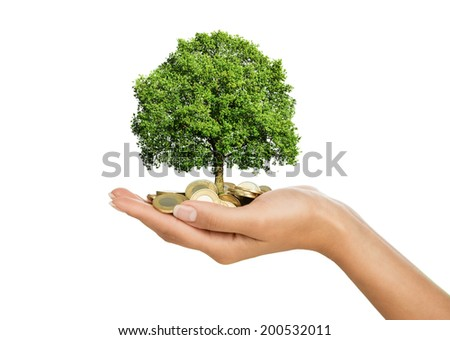 Savings, investment concept. Close up of female hand holding stack of golden coins with small tree growing out of it, isolated on white background - stock photo