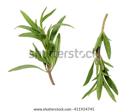 savory branches on a white background 