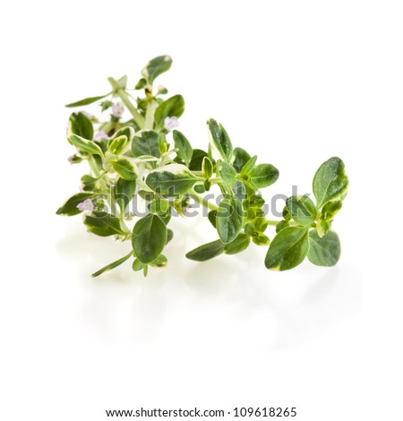 Savory fresh herb isolated on white background - stock photo