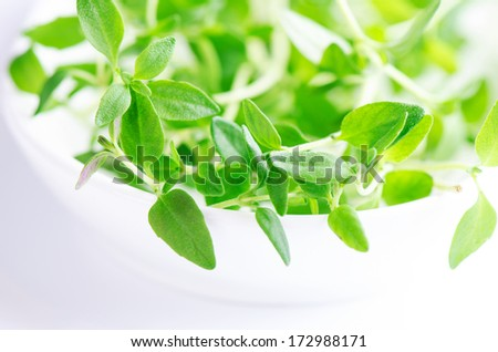 Savory fresh herb on white - stock photo