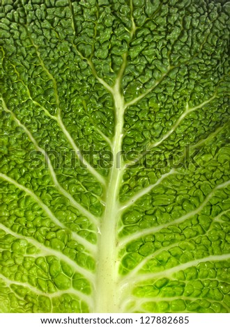 Savoy Cabbage Leaf Texture  Macro Background - stock photo