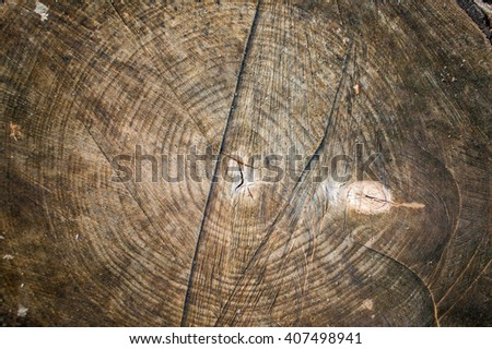 Saw cut of a birch log, annual rings with lichens - stock photo