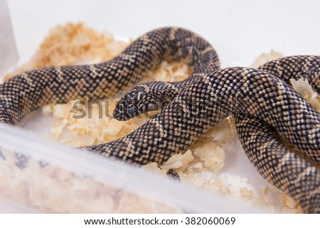 saw dust for snake bedding