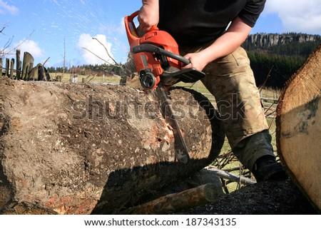 Sawdust flies as a man cuts a fallen tree into logs. - stock photo