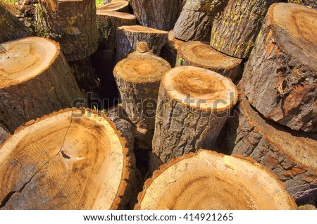 Sawed poplar tree trunk. Cross section of the timber, cut trees, firewood stack for the background. Close up pile of logs background. Stack of freshly cut poplar timber. Heap of wooden log in a forest - stock photo
