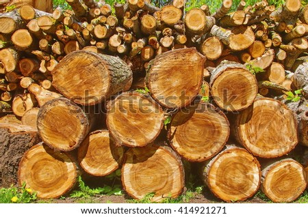 Sawed poplar tree trunk. Cross section of the timber, cut trees, firewood stack for the background. Close up pile of logs background. Stack of freshly cut poplar timber. Pile of wood in forest - stock photo