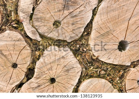 Sawed tree stumps with holes for insects - stock photo