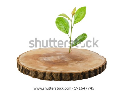 sawn wood cut green sprout - stock photo